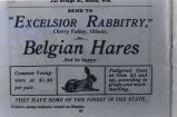 Excelsior Rabbitry advertisement, 1901
