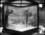 Illinois Winter Birds diorama