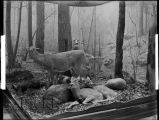 Spring. Four Seasons of the Deer diorama or group.