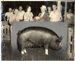 Grand Champion Berkshire Sow, 1948