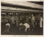 Swine judging, Junior livestock division, 1937