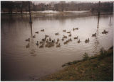 Galena River flood of 1995 on Riverside Drive